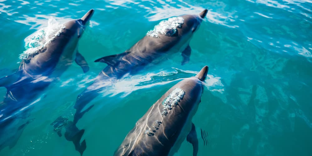 Dolphins seen from a boat
